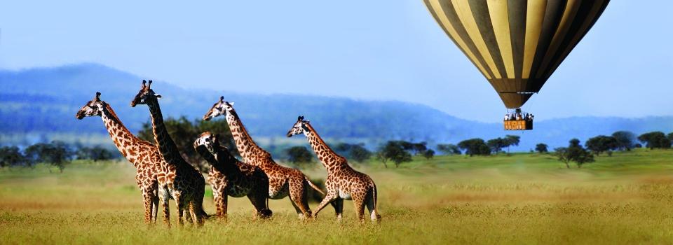 Balloon Safari, Safari holidays in Africa